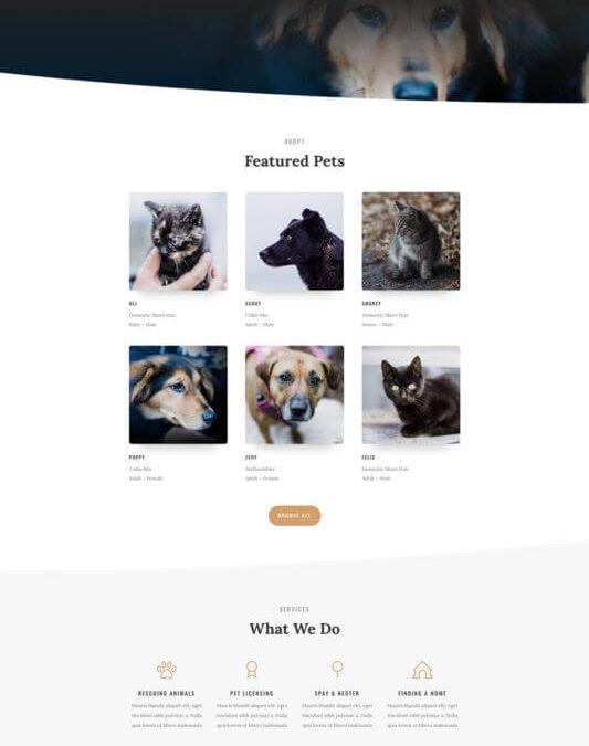 Refugios de Animales